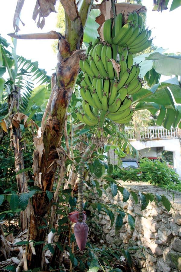 Relatos Misioneros Julio-Agosto: Foto de Dennis Moorman, M.M./Haití