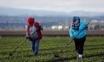 La ira de la pandemia afecta a los trabajadores agrícolas