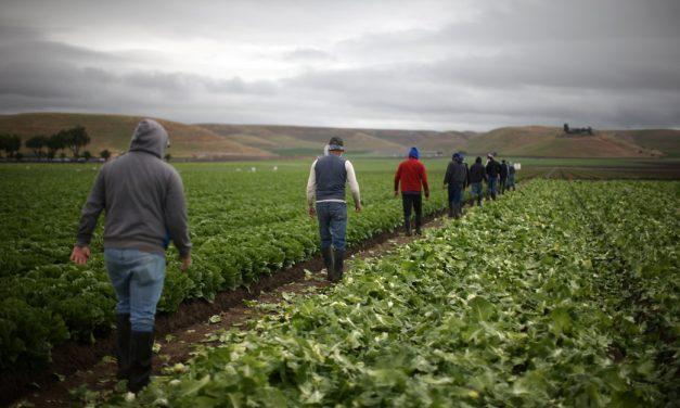 Activista: Campesinos nuevamente 'tratados como trabajadores de segunda clase'