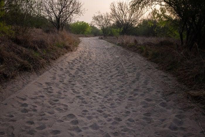 Se ven huellas de migrantes en busca de asilo en un camino de tierra en Penitas, Texas, después de cruzar el Río Grande el 17 de marzo de 2021. El Servicio de Inmigración y Control de Aduanas informa más de 12.000 casos de coronavirus en centros de detención. (Foto CNS/Adrees Latif, Reuters)