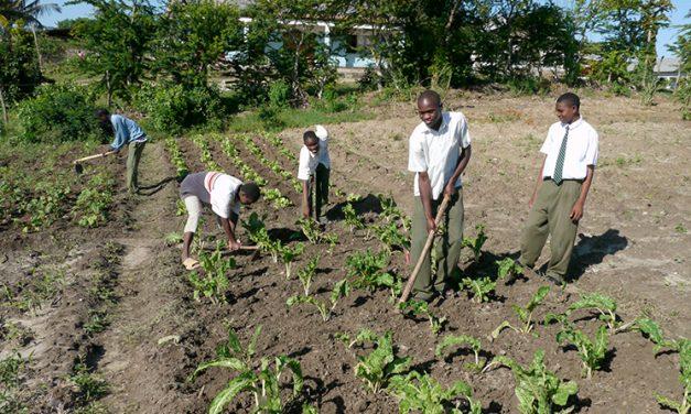 Papa: Para alimentar al mundo, hay que comenzar con las granjas familiares